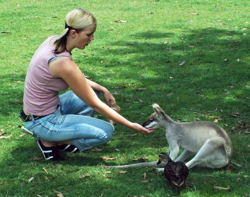 ebookers+australia