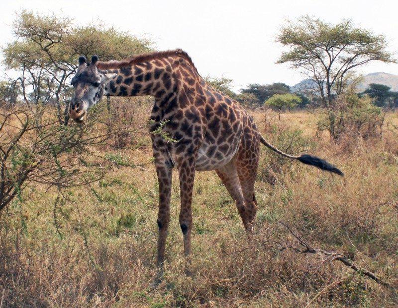 ebookers+tanzania+safari