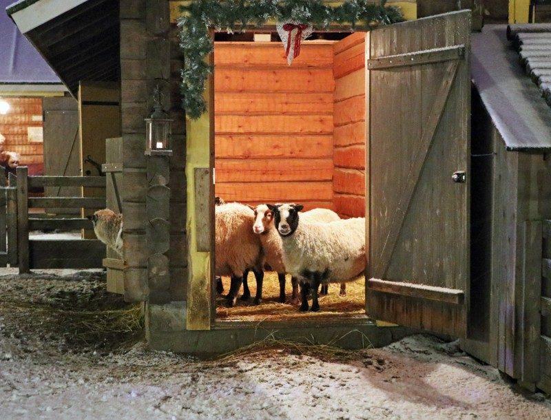koiramäki+lampaat