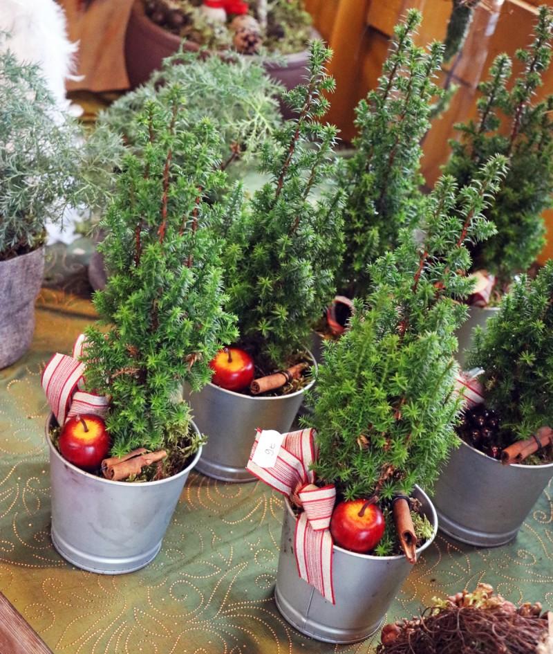 tallipiha+joulukoriste